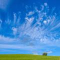 写真: 美瑛の雲