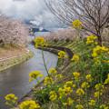 写真: 水無川沿い
