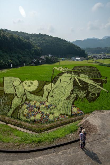 写真: 田んぼアート
