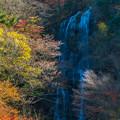 写真: 白滝