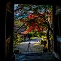 写真: 山門