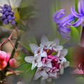 Photos: 花 collage