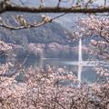 Photos: 1万本の桜(市房ダム湖)