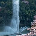 Photos: 肥後平家湖の噴水と桜