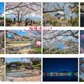 桜情景 collage