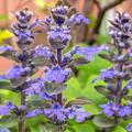 花(青紫色)の搭