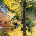Photos: 康平寺の黄葉