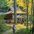 Photos: 竹林に囲まれて
