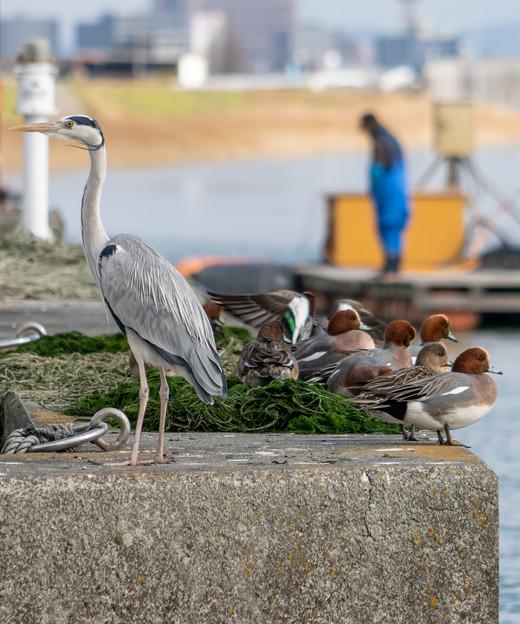 Photos: 漁港の鳥さんたち