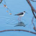 Photos: 散歩コースの鳥さん