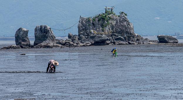 Photos: 風流島(たはれじま)