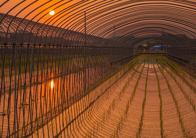 Photos: 夕陽染まる