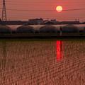 Photos: 夕陽に映える