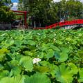 Photos: 国宝青井神社も水浸し