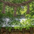 Photos: ひまわり園の近くで