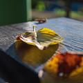 Photos: 秋の香りが漂う