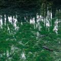 Photos: 明神池