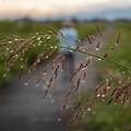 雨上がり後の散歩コース
