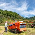 Photos: 棚田の稲刈り