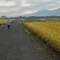 Photos: 片田舎の田園風景