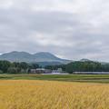 Photos: ASOを背景に田園駆ける(あそぼーい)