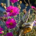Photos: まだまだ咲いています