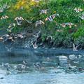 Photos: 川沿いの鳥さんたち