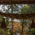Photos: 住吉神社境内