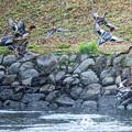 Photos: 散歩道の鳥さん