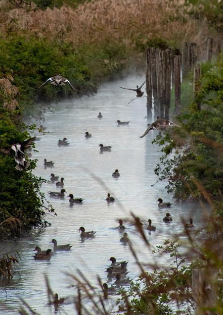 散歩道の渡り鳥たち