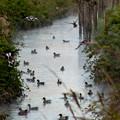 Photos: 散歩道の渡り鳥たち