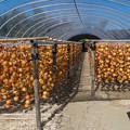 干し柿の郷