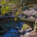 Photos: 小さな石橋