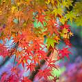 Photos: おもてなしの紅葉