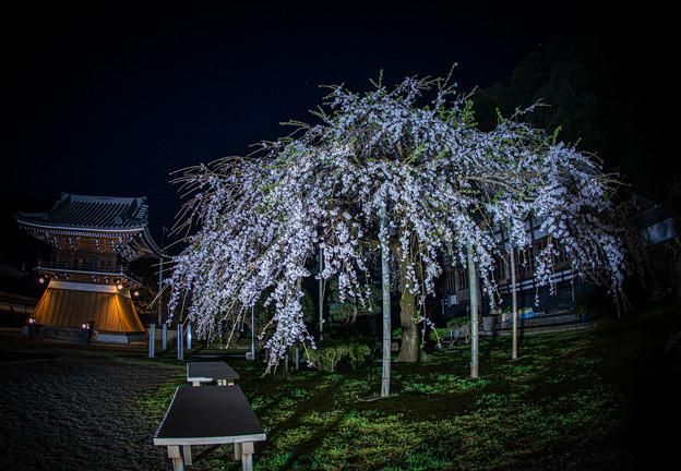宗覚寺のライトアップ