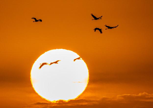 Photos: 朝陽に舞う
