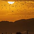 Photos: 朝陽と鶴