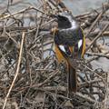 Photos: 水辺の鳥さん