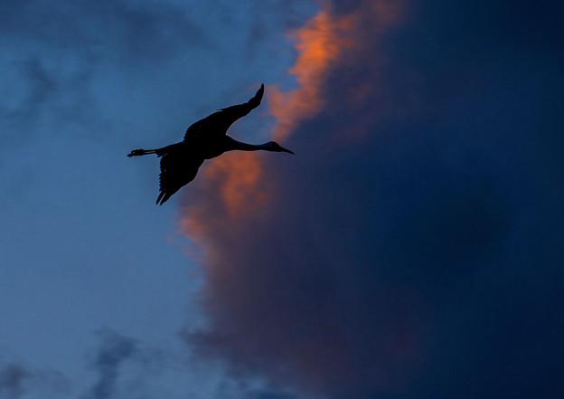 flight(飛翔)