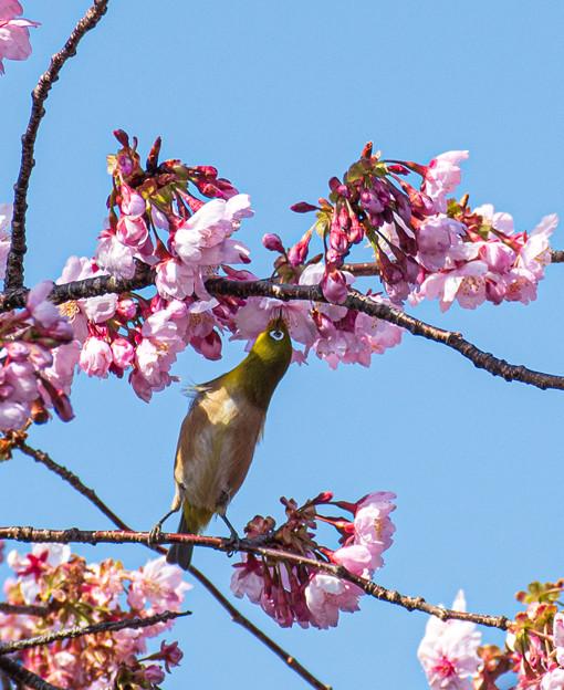Photos: 春ですね~