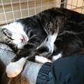 Photos: 今日の邪魔猫