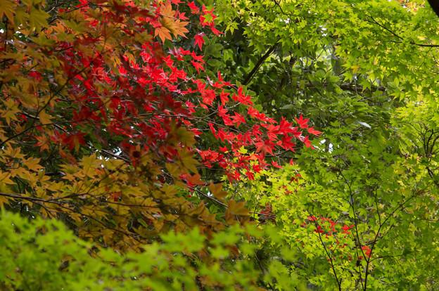 写真: 緑の中に燃える赤