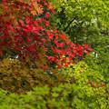 Photos: 緑の中に燃える赤