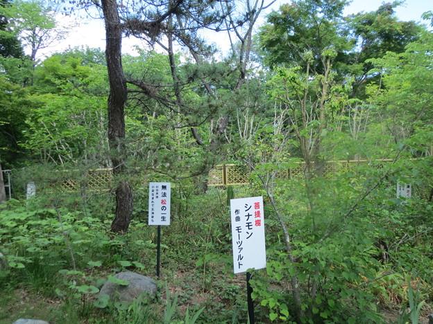 音楽寺の庭