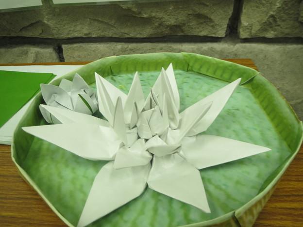 折り紙で作ったオオオニバス