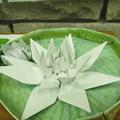 写真: 折り紙で作ったオオオニバス