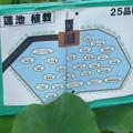 写真: 蓮池植栽