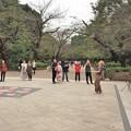 上野公園・ヘブンアーティスト(大道芸人)
