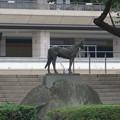 東京競馬場 トキノミノル像