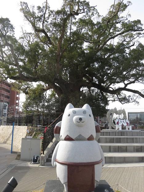 磐田駅前の「大楠」と「イメージキャラクター・しっぺい」